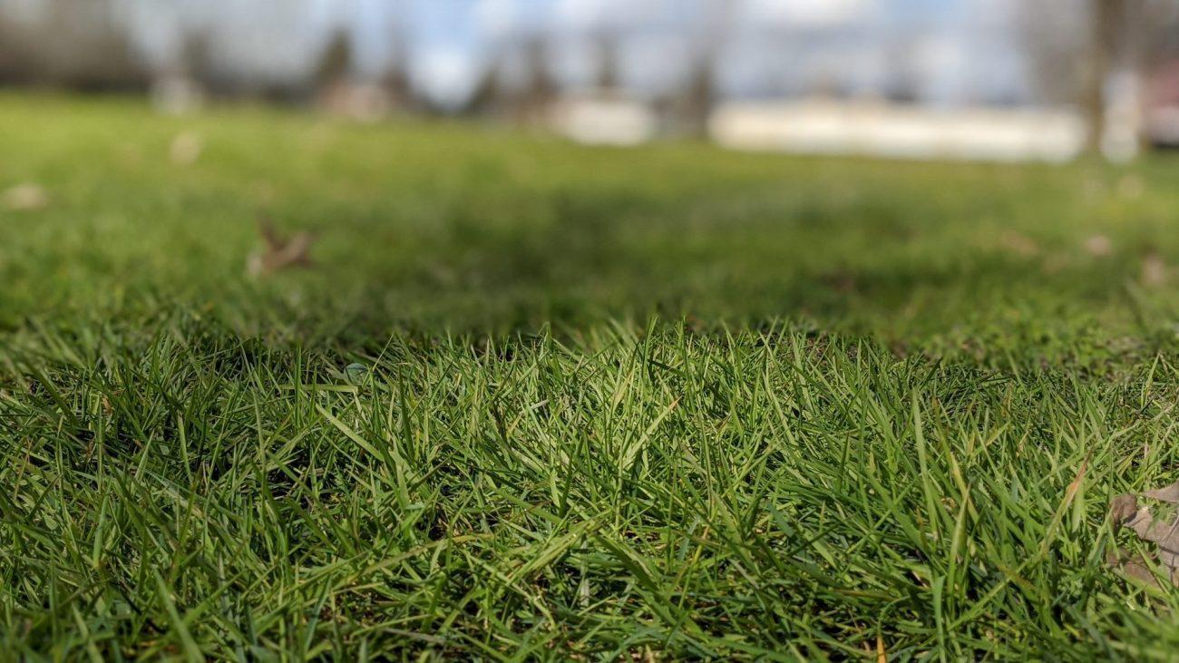 artificial grass specialists