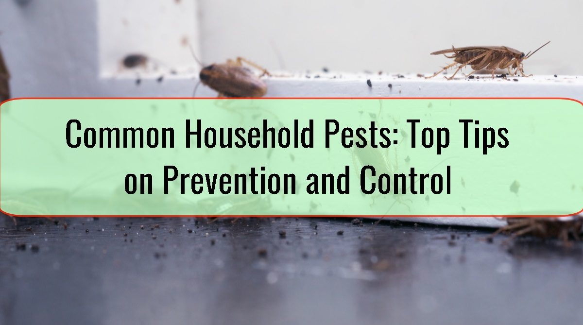 Common Household Pests Top Tips on Prevention and Control